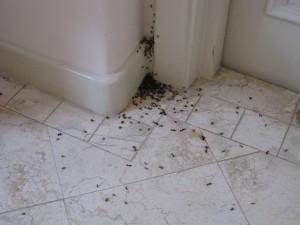 Насекомые в ванной
