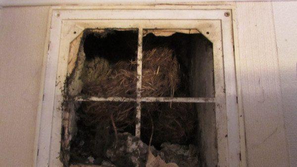 Пример забитой благодаря «заботливым» соседям вентиляции